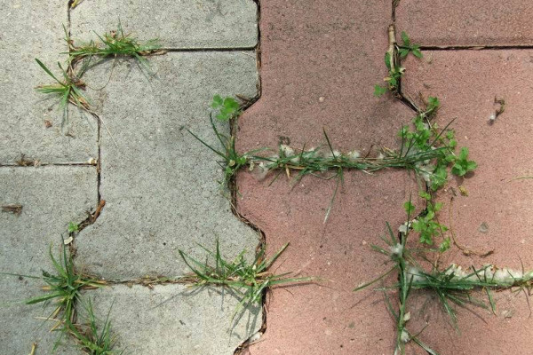 Как защитить садовые дорожки от сорняков?