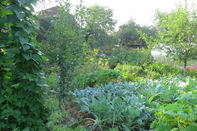 Основные категории рубрики Сад и огород