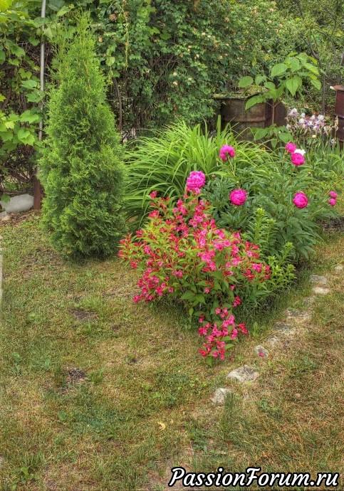 Растения в моем саду