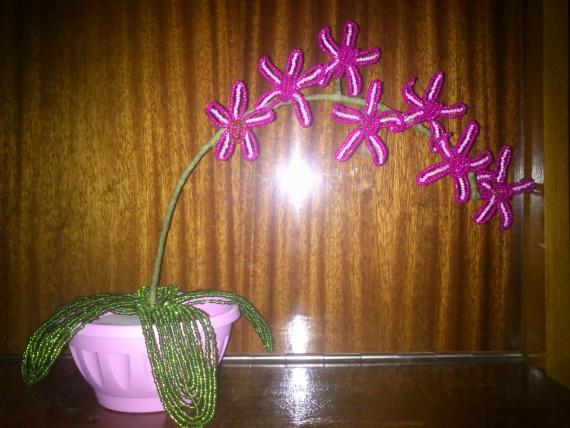 звездчатая орхидея
