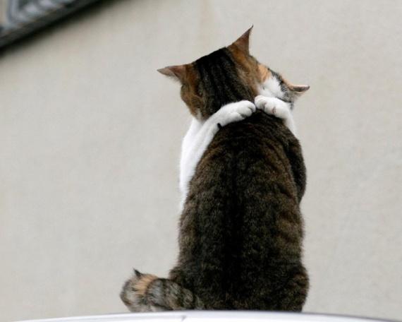 Еще немного кошачьего, да и просто подумать...