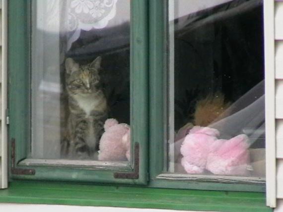 Сюжеты за моим окном, в разные времена года
