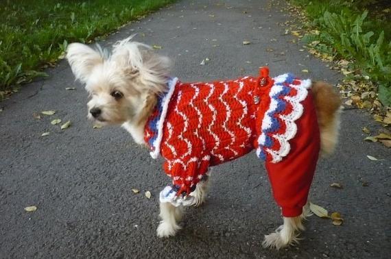Вязанное платьице для маленькой собачки