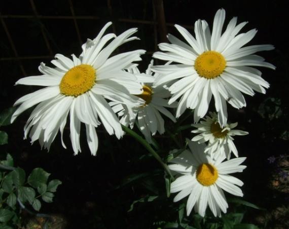 В природе всё прекрасно! Простые цветочки:)