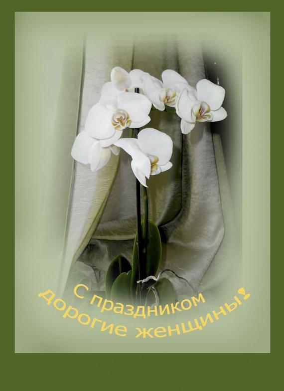 Поздравляю всех женщин с праздником!