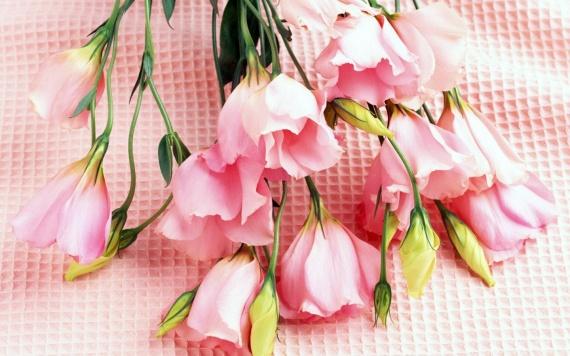 День влюблённых всех вас Форумчане.