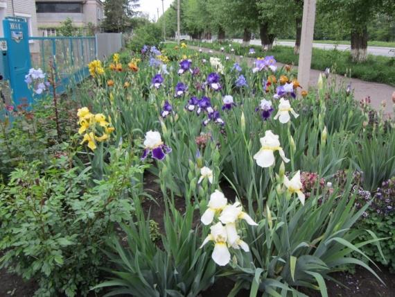 Весна в разгаре 2