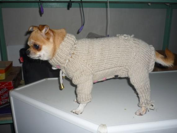 Вяжем для животных