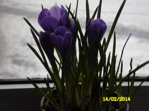 Природа сделала мне подарок на 14 февраля