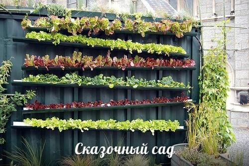 Делаем вертикальный сад из