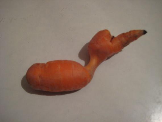 морковка-птица