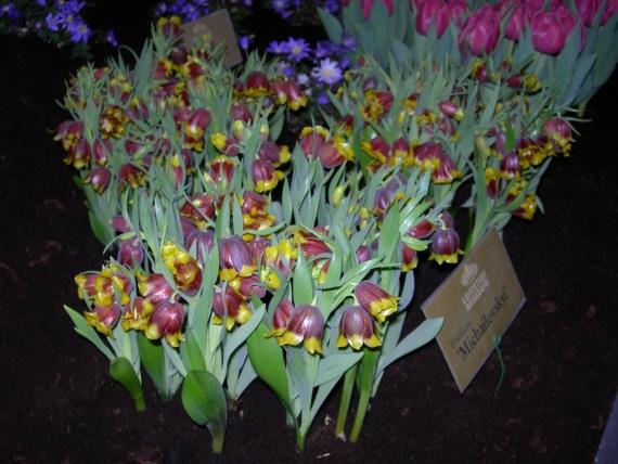 Огорода у меня нет.... но эстафету продолжаю... сегодня маленьки экзотические цветы...ну а завтра тю