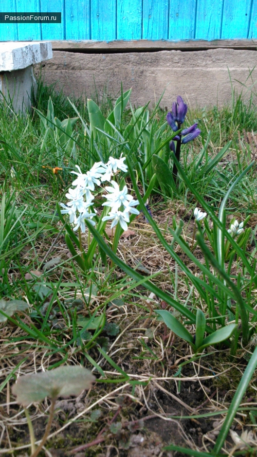 А к нам весна пожаловала!..