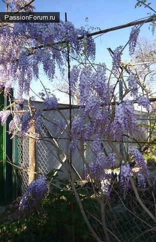 Во саду ли в огороде - мои цветочки