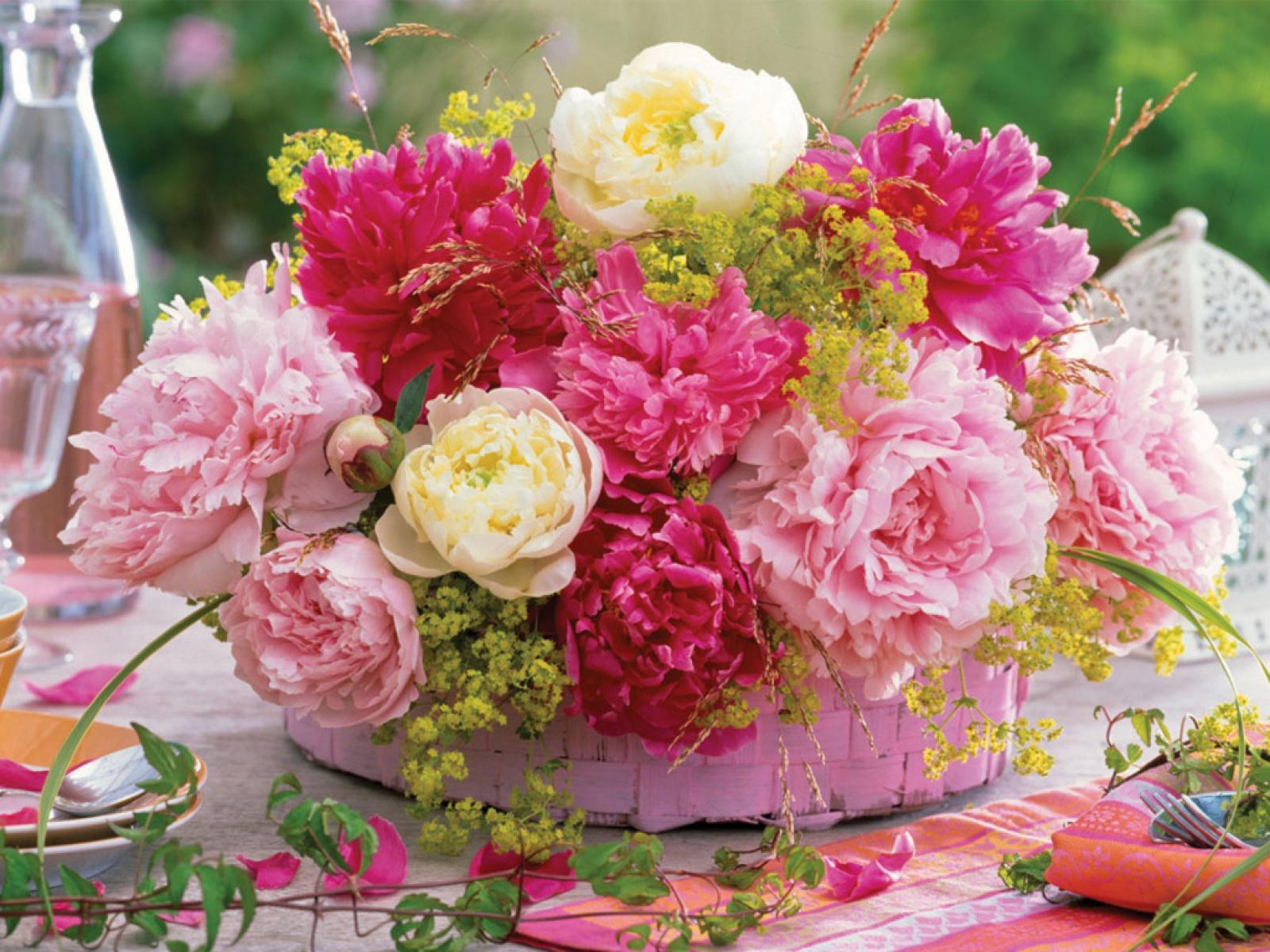 Пионовидные сорта тюльпанов фото вот