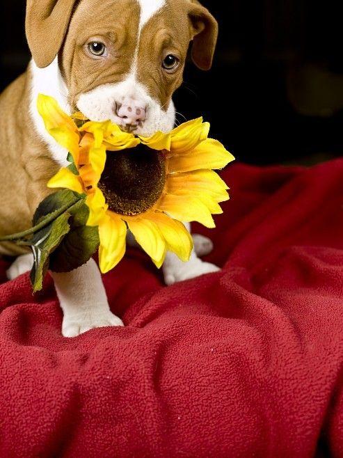 Открытка дарю тебе цветочек, самой лучшей девочки