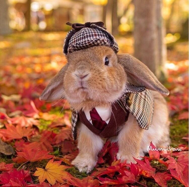 прославился осень смешные животные российский