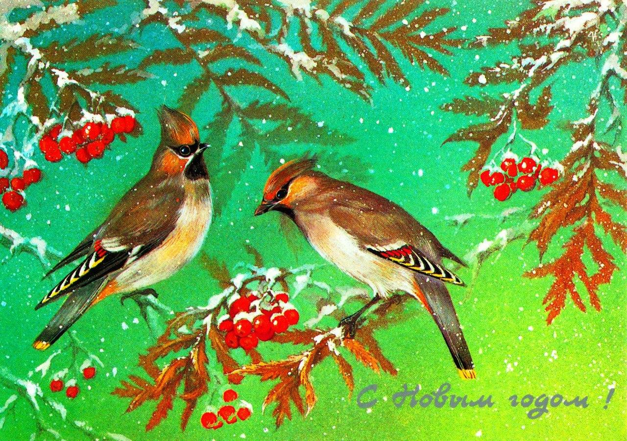 Другу бабочками, смотреть старые открытки снегири на рябине красивые и новогодние