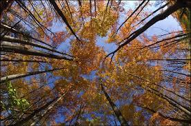 | Сентябрь. Кругом паук ткет паутину, На небе солнца яркий блеск. Забудь заботы, будних дней рутину, Сходи и посмотри осенний лес. Он так прекрасен в это бабье лето, Нет сырости, и дышится легко, На солнечных полянах много света И на душе приятно от него. Сентябрь. В траве кузнечики стрекочут, У бабочек последний хоровод, И лето уходить никак не хочет, Но все ж к концу идет и этот год.