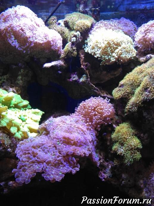 Если не ошибаюсь, кораллы.