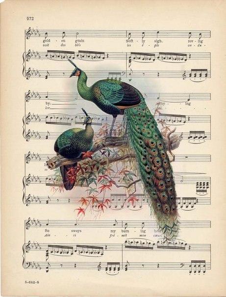 Открытка с нотами и птичками, прикольные