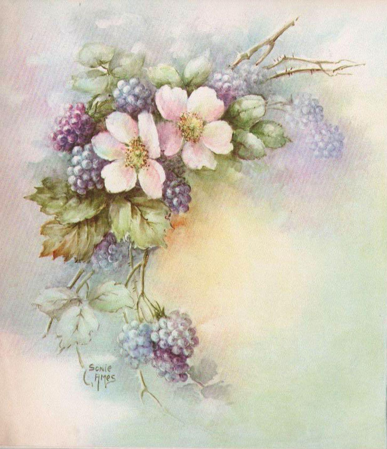 Цветы прованс открытки