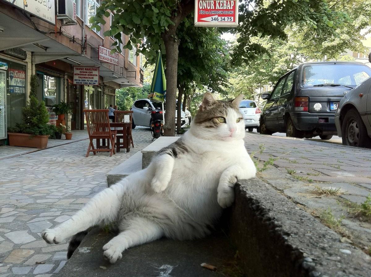 Вальяжный кот картинка