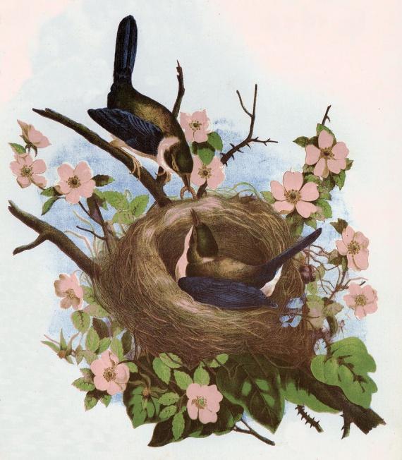 Открытка гнездо, открытки